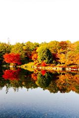 昭和記念公園の水鳥の森