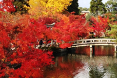 昭和記念公園の回遊式大名庭園
