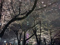 2018年隅田公園の夜桜その1